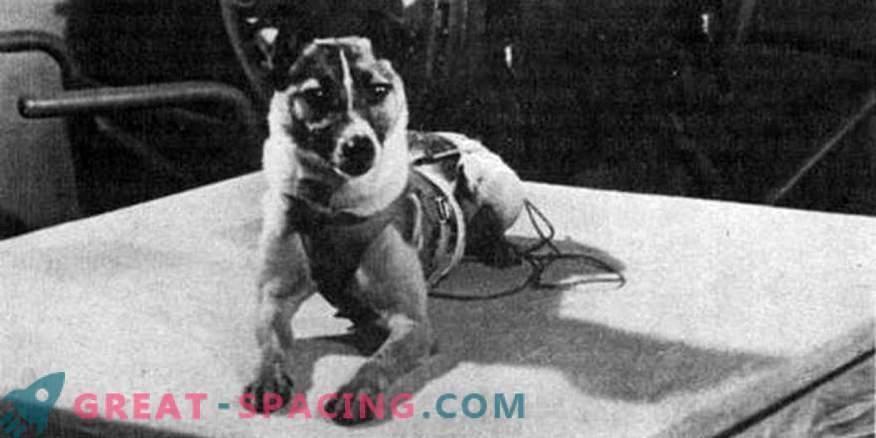 Preparación Laika para lanzamiento espacial